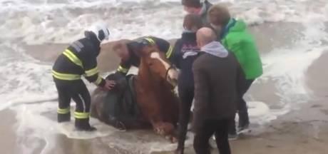 Helden redden paard uit drijfzand Belgische kust